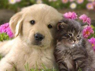 Страхование домашних животных - программы, нюансы составления договора